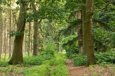 Forstbetrieb Schloss Wissen