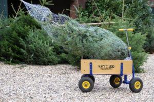 Weihnachtsbaumschlagen auf Schloss Wissen - Tannenbaumtransport mit Bollerwagen