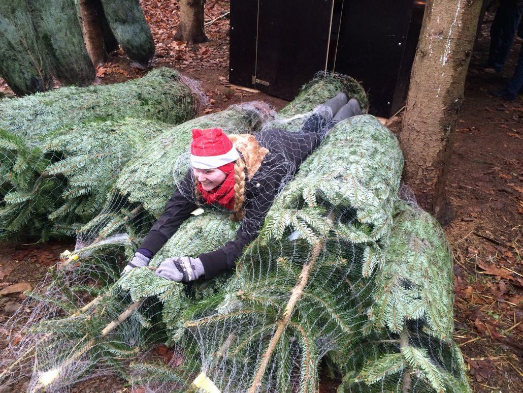 Weihnachtsfeier mit Tannenbaumschlagen