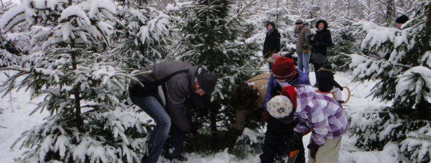 Weihnachtsbaum selber schlagen im schneebedeckten Schloss Wissener Wald