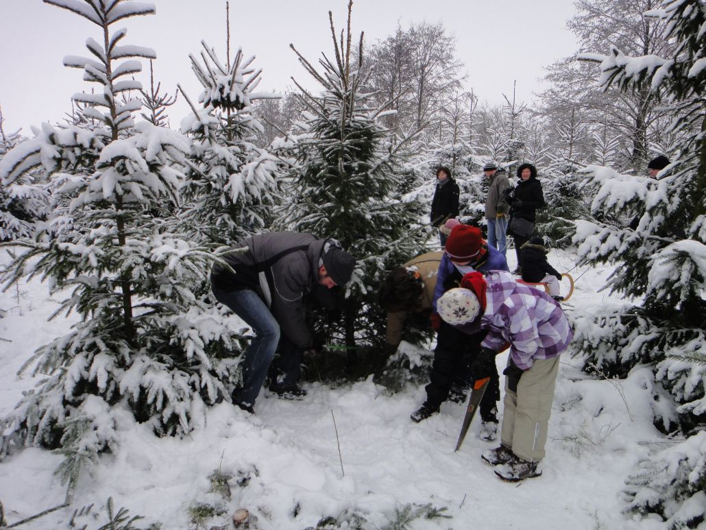 Tannenbaum Selber Schlagen.Weihnachtsbaumschlagen Am 8 Dezember 2019 Schloss Wissen