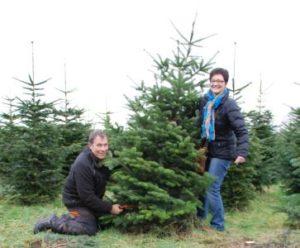 Weihnachtsbaumschlagen in der Schonung von Schloss Wissen
