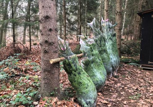 Weihnachtsfeier auf Schloss Wissen mit Tannenbaumschlagen